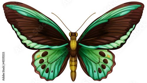 Common green birdwing Wallpaper Mural