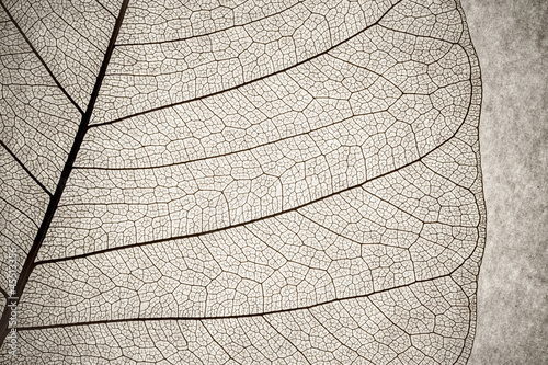 Photo Stands Macro photography grunge effect leaf cell macro
