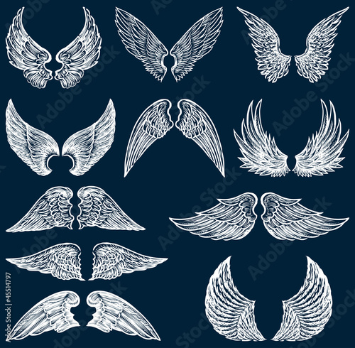 Fotografia, Obraz  white wings