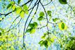 canvas print picture - Blätter