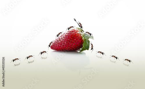 Fotografie, Obraz  meyve zamanı