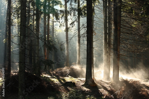 Spoed Foto op Canvas Bos in mist early morning mist in forest