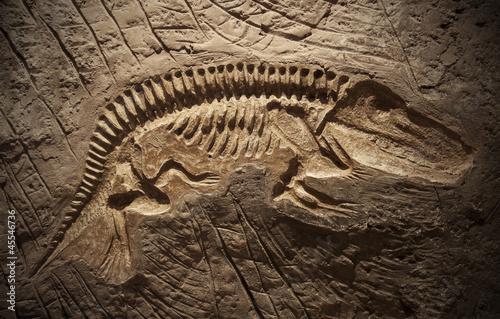 Fotomural  Model Dinosaur fossil