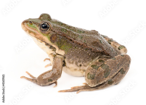 Spoed Foto op Canvas Kikker Green frog isolated