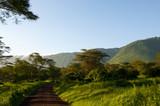 Fototapeta Sawanna - Tanzania, Afryka, Safari