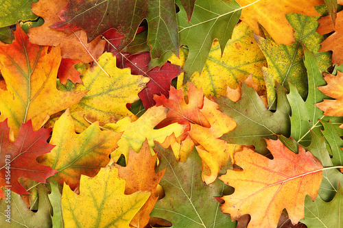 Photo  Autumn leaves