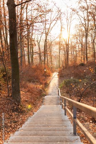 jesienna-sciezka-lesna