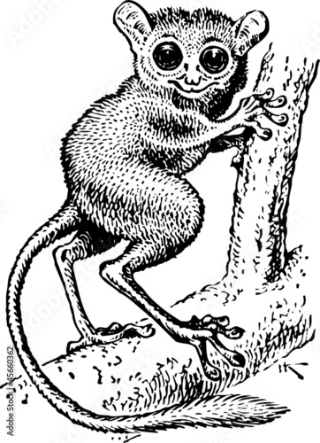 Photo  Tarsius pumilus standing on the branch of the tree
