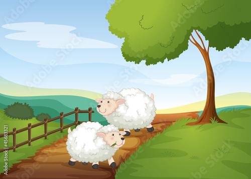 Poster Ranch sheeps