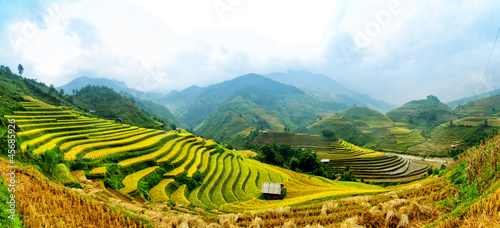 Photo Stands Rice fields Rice Terraces in Vietnam
