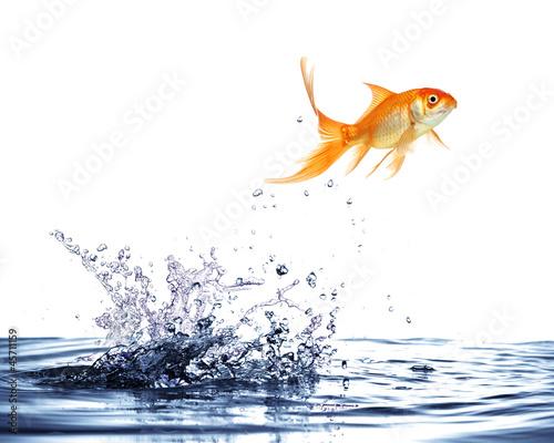 Fotografia salto del pesce rosso