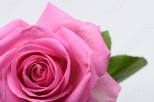 Spoed Foto op Canvas Macro Close up of pink rose heart