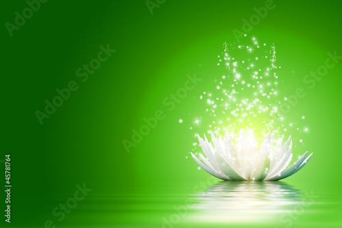Lotus flower #45781764