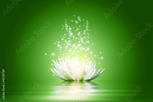 Lotus flower #45781769