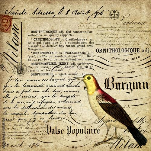 Obrazy z napisami pismo-kaligraficzne-i-ptak