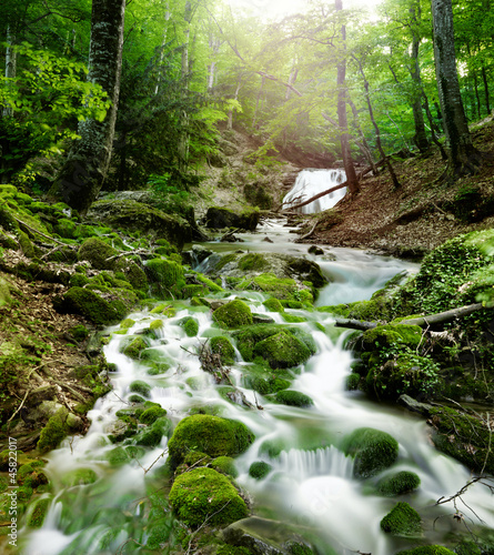 forest waterfall - 45822017