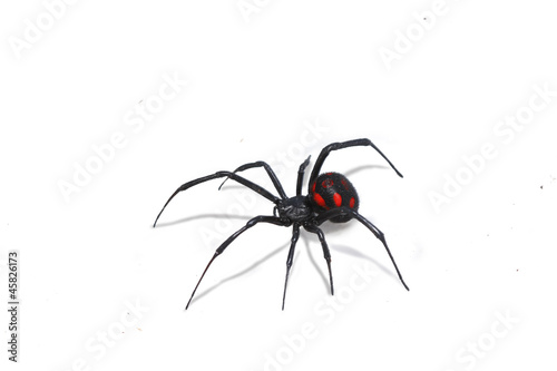 Valokuva  araignée