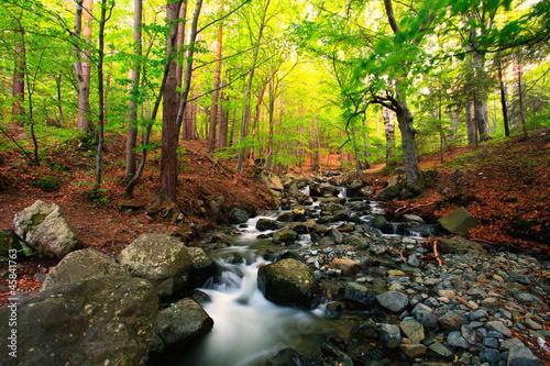 bulgarski-strumien-w-lesie