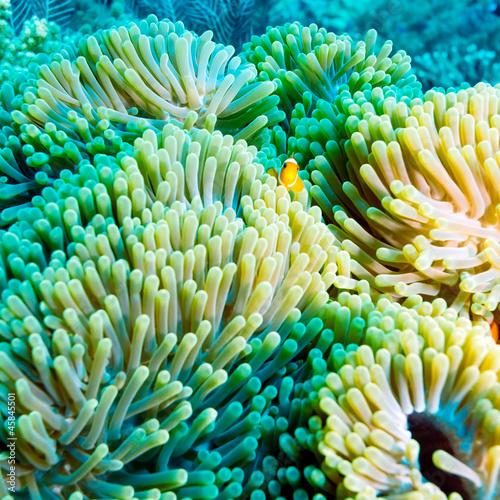 tropikalna-ryba-blisko-kolorowej-rafy-koralowa