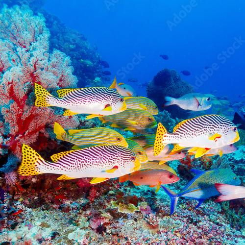 tropikalne-ryby-w-poblizu-kolorowej-rafy-koralowej