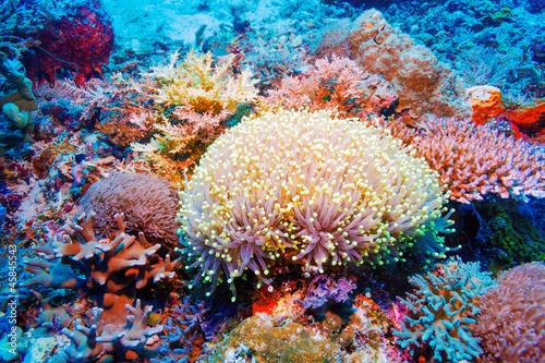 kolorowy-krajobraz-tropikalnej-rafy