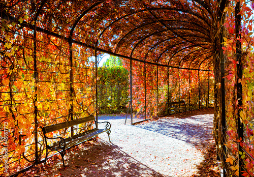 Deep red plant tunnel with autumn leafs