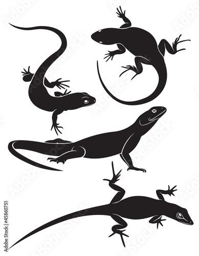 Valokuva lizard