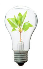 Green Tree Growing In A Bulb