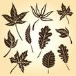 Herbst, Blätter, Laub, Braun, Brauntöne