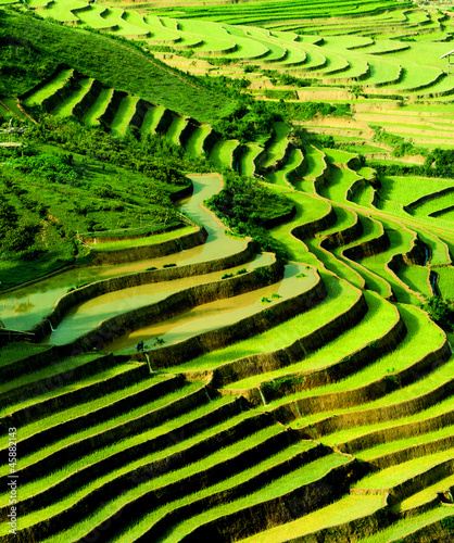 Tuinposter Groene terraced rice field in sunshine, Yen Bai, Vietnam