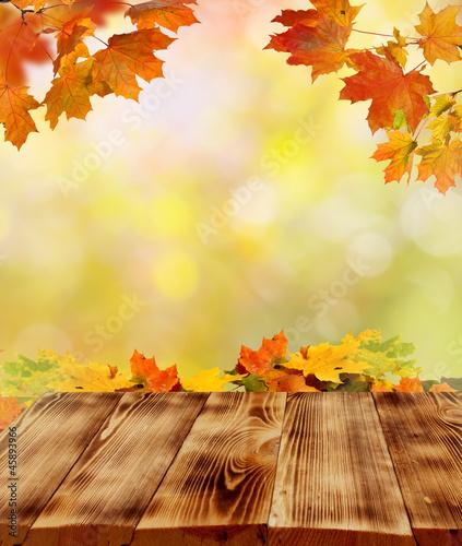 Foto Rollo Basic - autumn background (von Lilya)