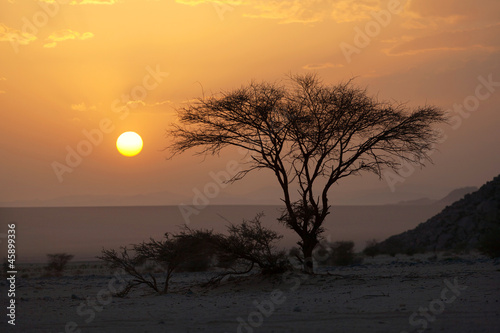 Staande foto Afrika Tree in the Sahara desert, sunset