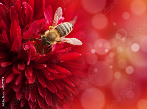 Flower with bee , defocused lights on background