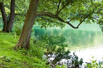 Fototapeta Do biura Jezioro w lesie