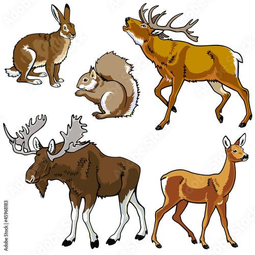 zestaw-zwierzat-lesnych