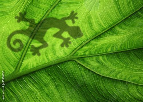 Naklejka na szybę Gecko auf Blatt