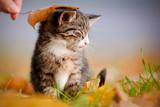 Uroczy kotek głaskany jesiennym liściem
