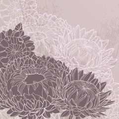 FototapetaVintage vector background with chrysanthemums