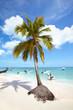 Tropical beach and palm.