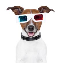 3d  Glasses Movie Cinema Dog
