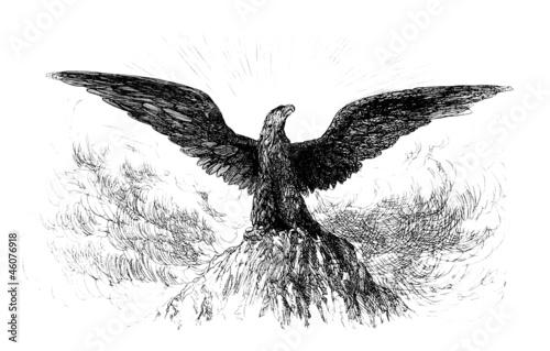 Photo  Royal/Imperial Eagle