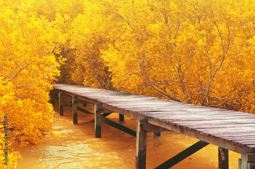 Fotobehang Meloen Wood bridge&yellow mangrove forest.