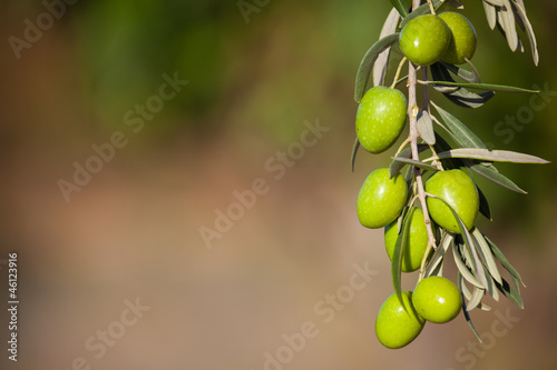 Foto op Aluminium Olijfboom background with olive branch