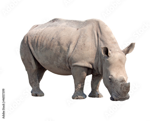 In de dag Neushoorn rhinoceros isolated on white background with paths