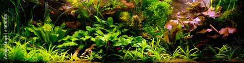 Poster Waterlelies Decorative Aquarium