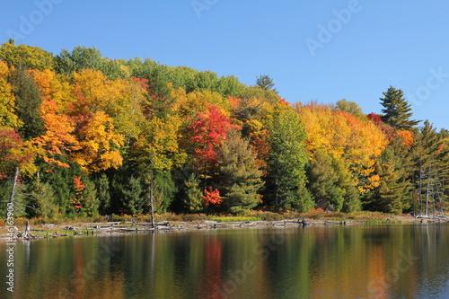 Poster Parc Naturel Trees reflecting on calm lake.