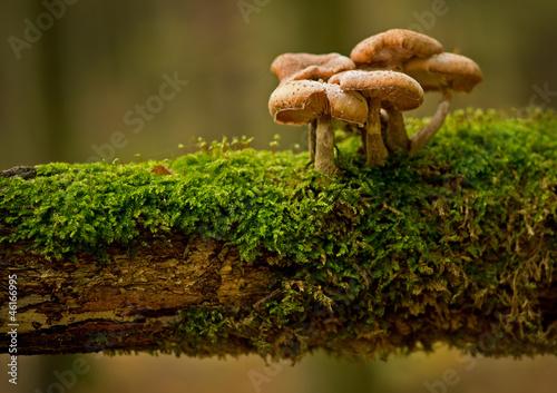 Fotografie, Obraz  Pilzfamilie