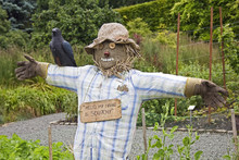 Scarecrow In Pollok Park