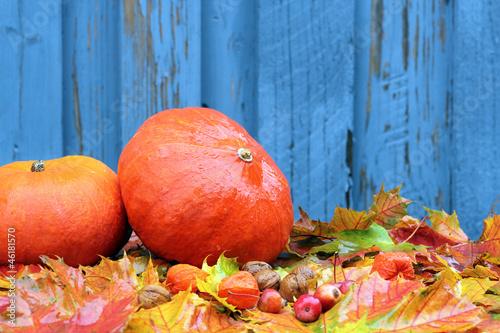 Fototapety, obrazy: Kürbisse und Herbstlaub im Regen