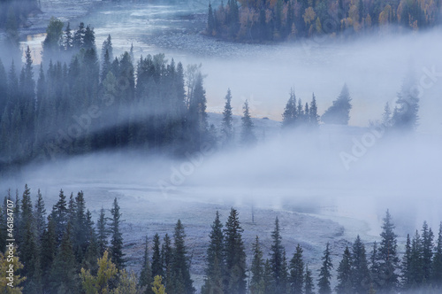 Aluminium Prints Forest in fog tranquil autumn in fog